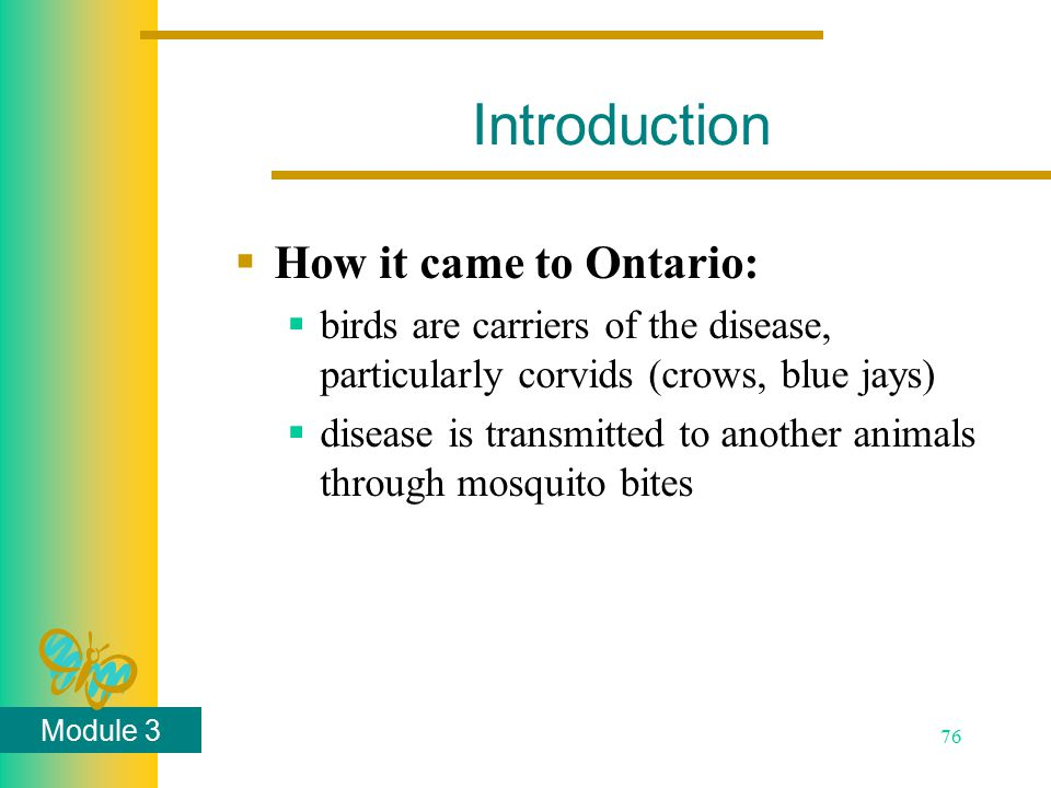 Module 3 76 Introduction  How it came to Ontario:  birds are carriers of the disease, particularly corvids (crows, blue jays)  disease is transmitt