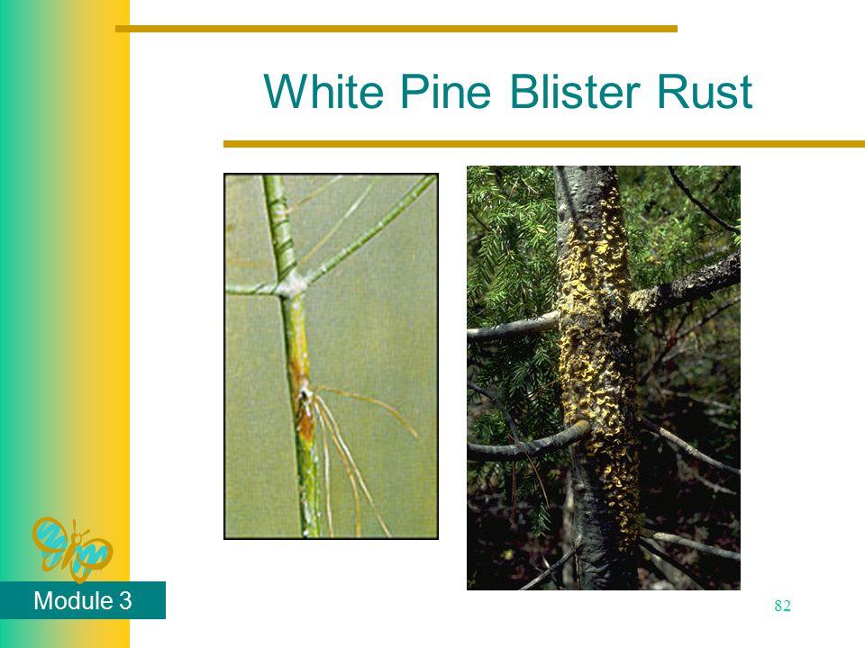 Module 3 82 White Pine Blister Rust