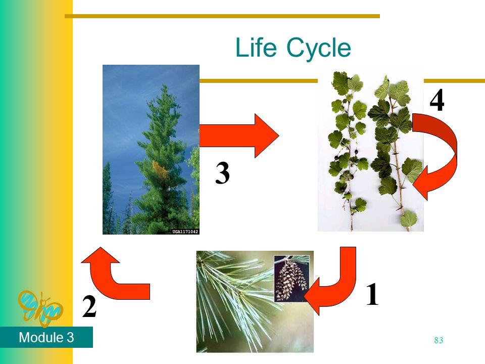 Module 3 83 Life Cycle 1 2 3 4
