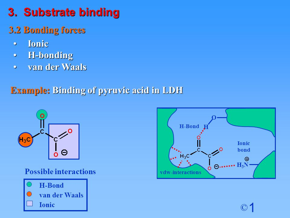 1 © van der Waals H-Bond Ionic IonicIonic H-bondingH-bonding van der Waalsvan der Waals 3.2 Bonding forces Example: Binding of pyruvic acid in LDH O H H3NH3N H-Bond Ionic bond Possible interactions vdw-interactions 3.