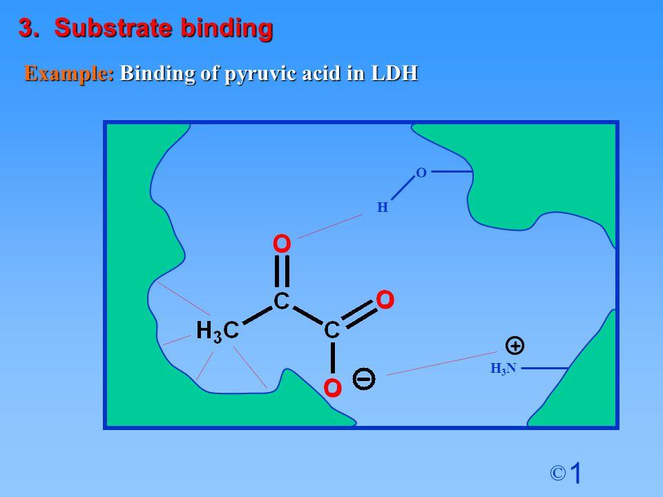 1 © Example: Binding of pyruvic acid in LDH O H H3NH3N O O O 3. Substrate binding