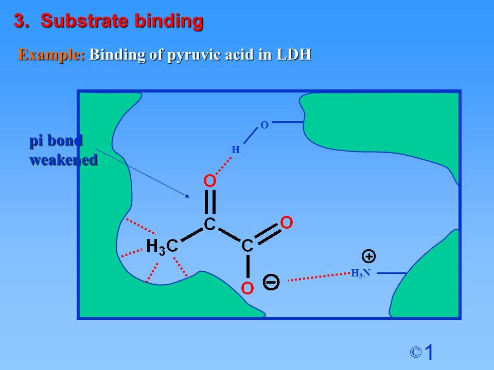 1 © Example: Binding of pyruvic acid in LDH O H H3NH3N pi bond weakened 3. Substrate binding