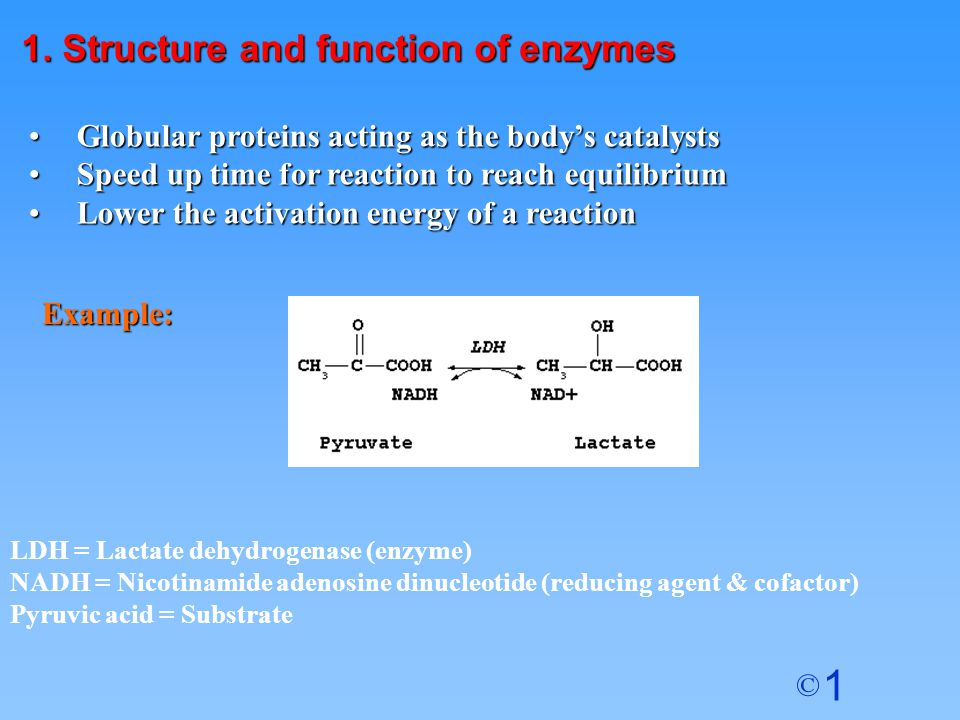 1 © ACTIVE SITE (open) ENZYME Enzyme 8.