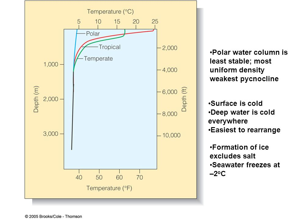 Polar water column is least stable; most uniform density weakest pycnocline Surface is cold Deep water is cold everywhere Easiest to rearrange Formati