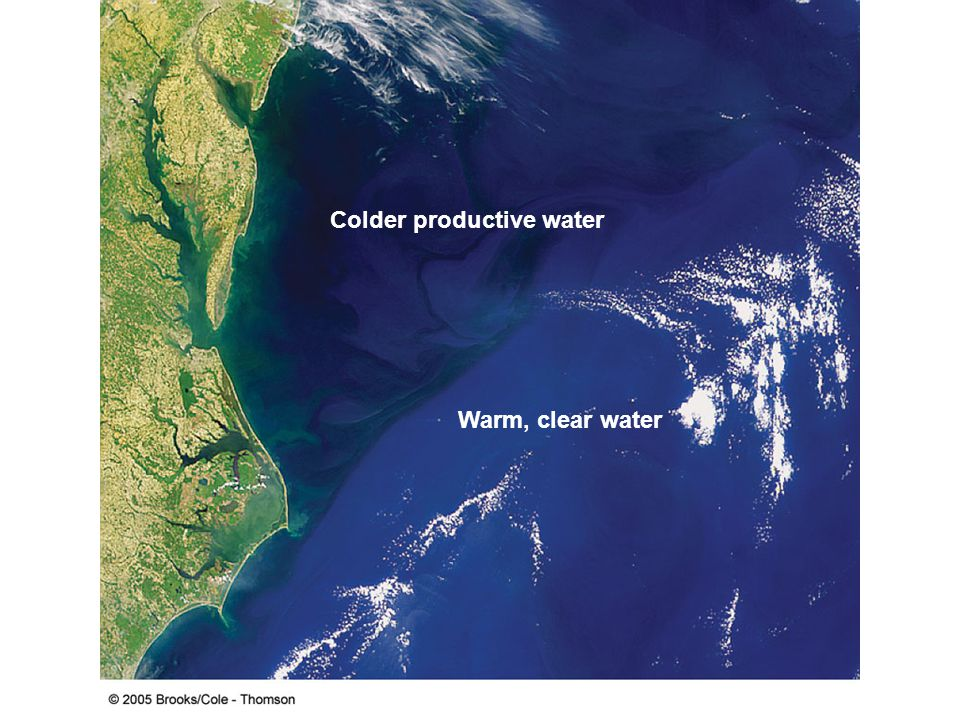 Warm, clear water Colder productive water