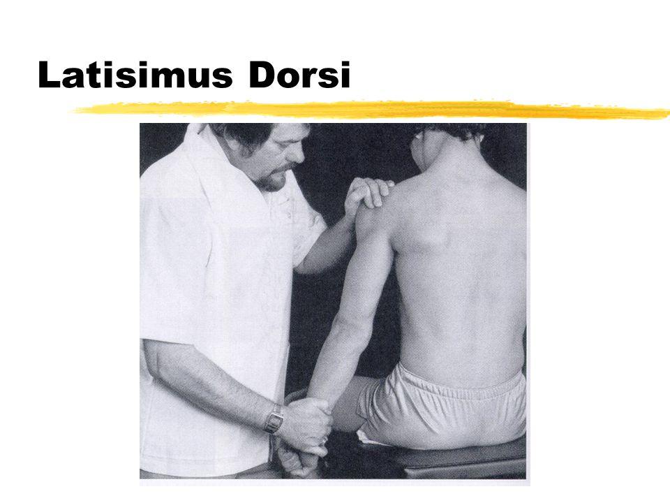 Latisimus Dorsi