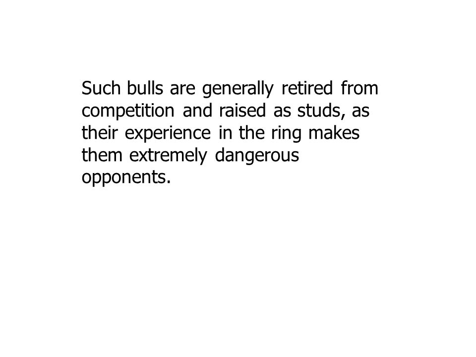 Such bulls are generally retired from competition and raised as studs, as their experience in the ring makes them extremely dangerous opponents.