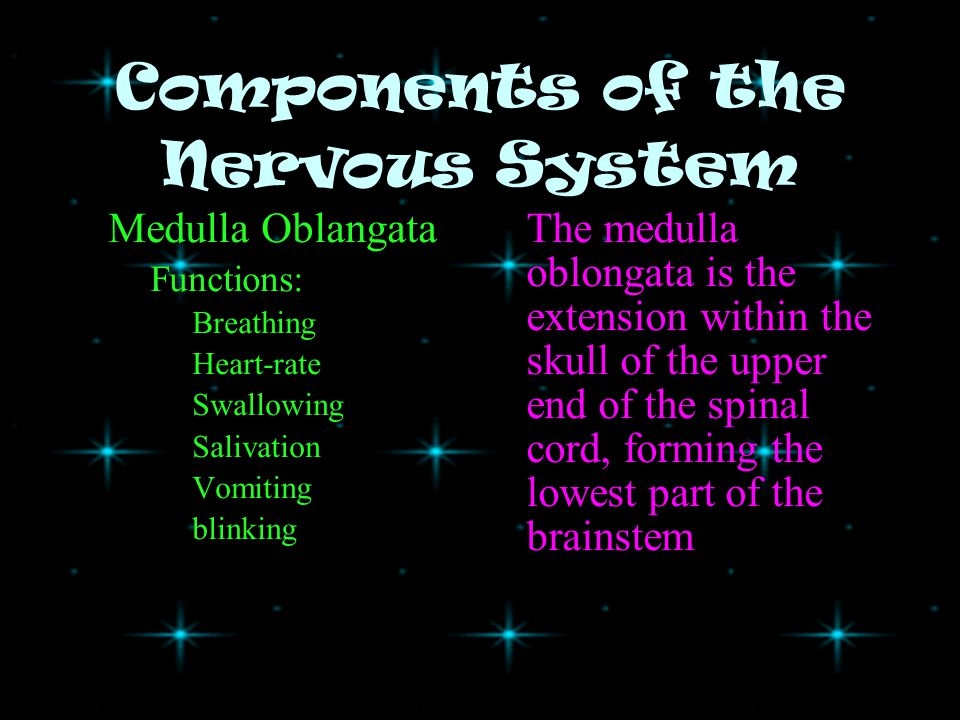 Components of the Nervous System Hypothalamus –Functions: Posterior lube of the pituitary –A.DH.