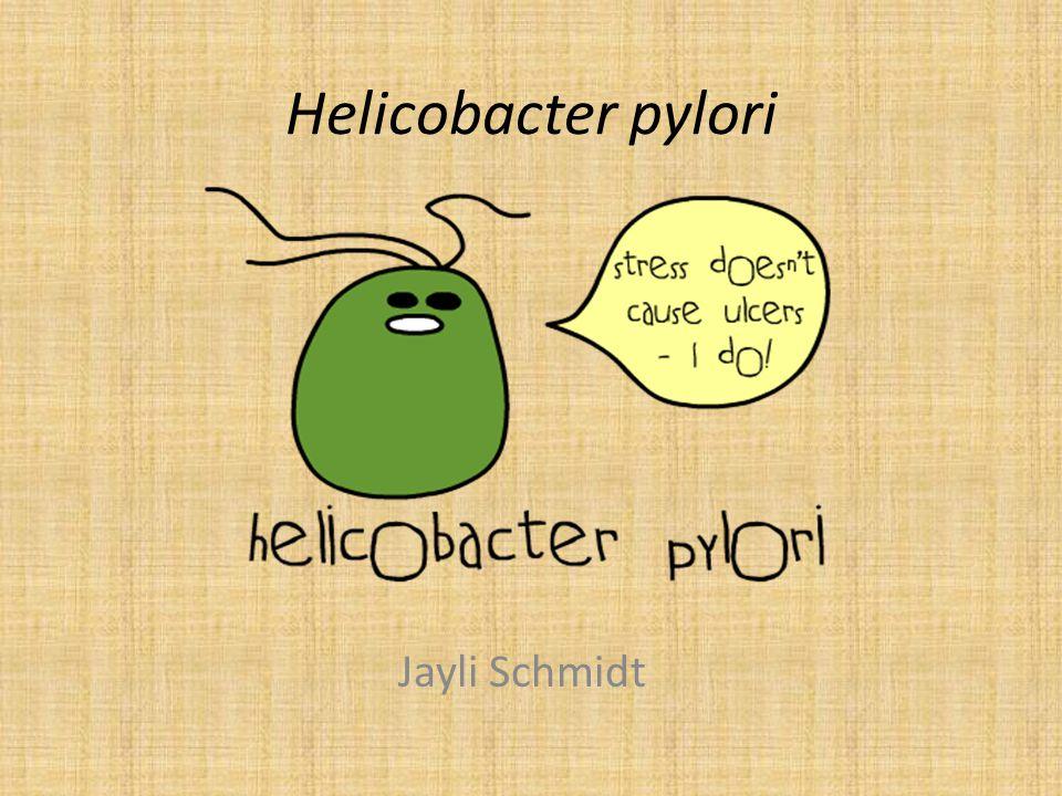 Helicobacter pylori Jayli Schmidt