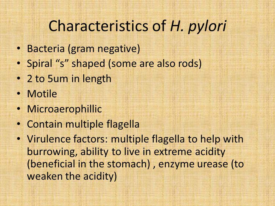Characteristics of H.