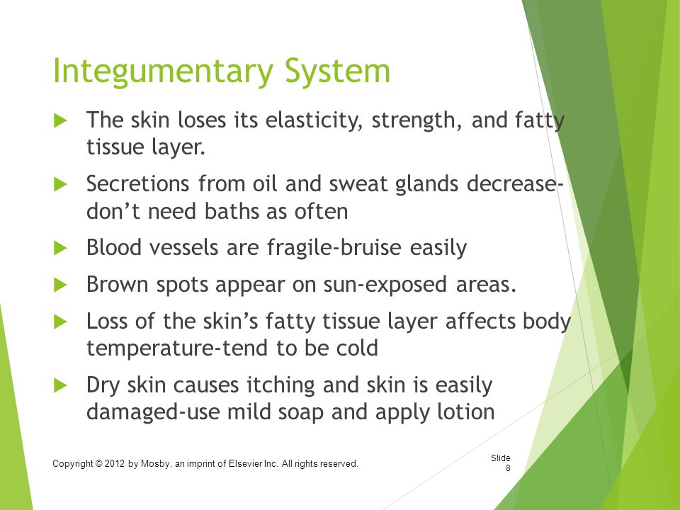 Integumentary System  The skin loses its elasticity, strength, and fatty tissue layer.
