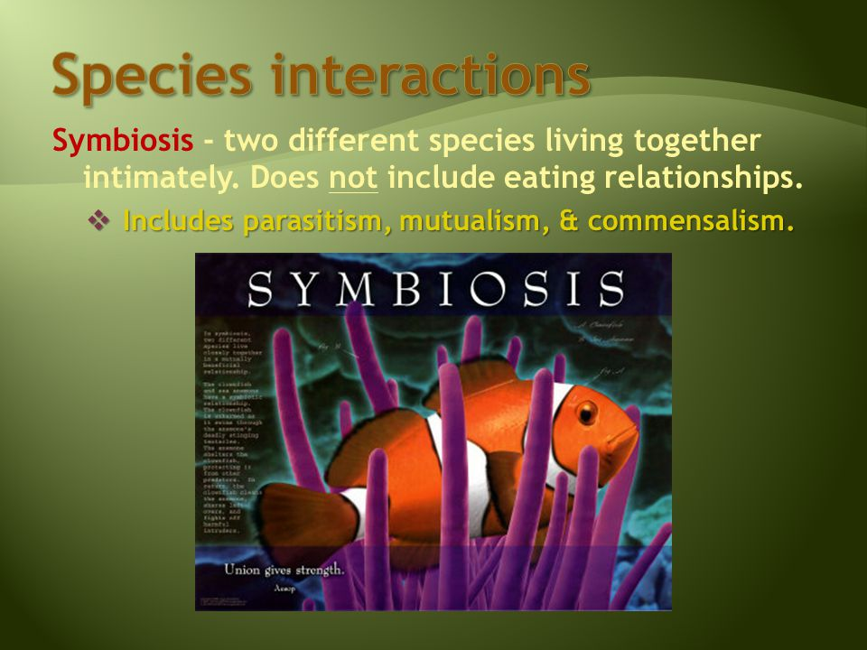 Symbiosis - two different species living together intimately.