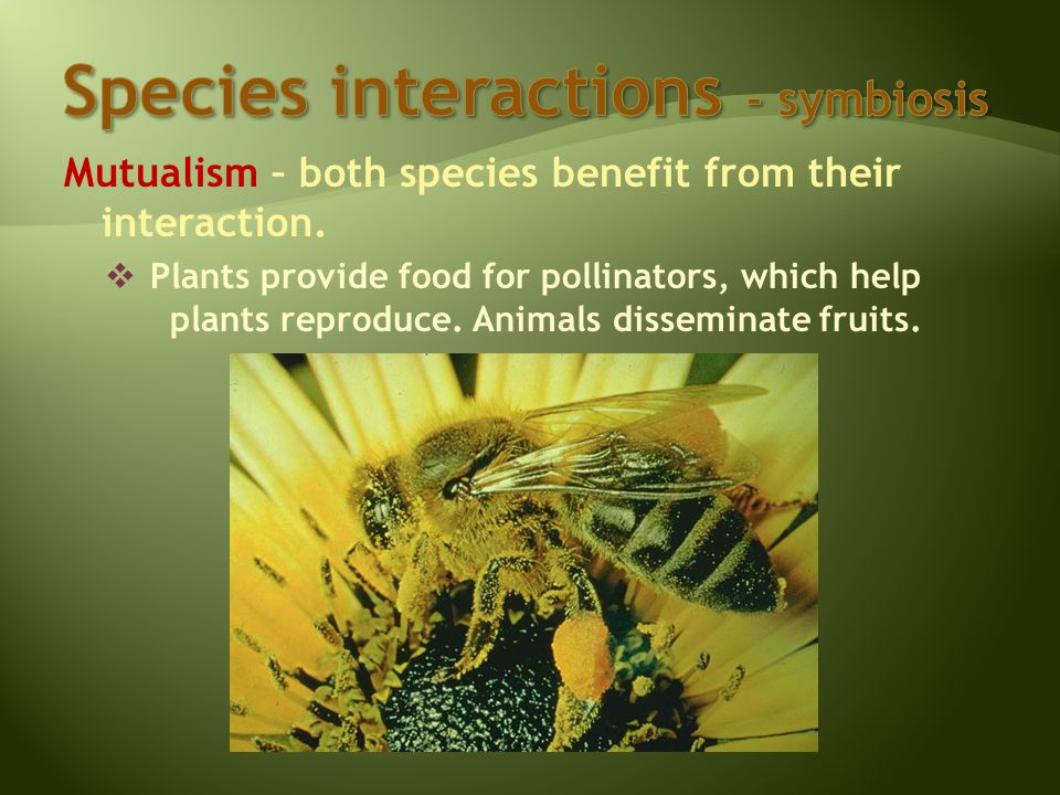 Mutualism – both species benefit from their interaction.