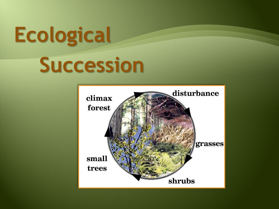 Ecological Succession Succession