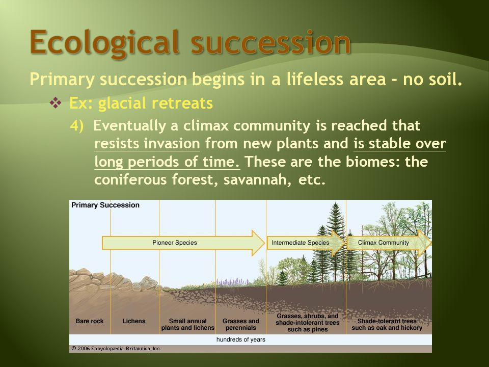 Primary succession begins in a lifeless area - no soil.