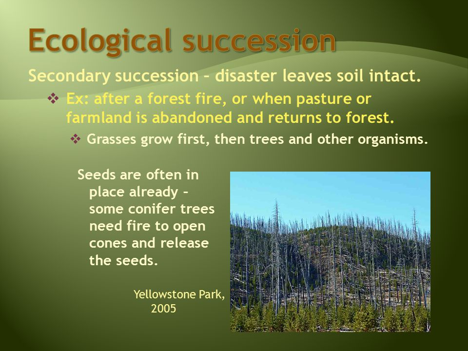 Secondary succession – disaster leaves soil intact.