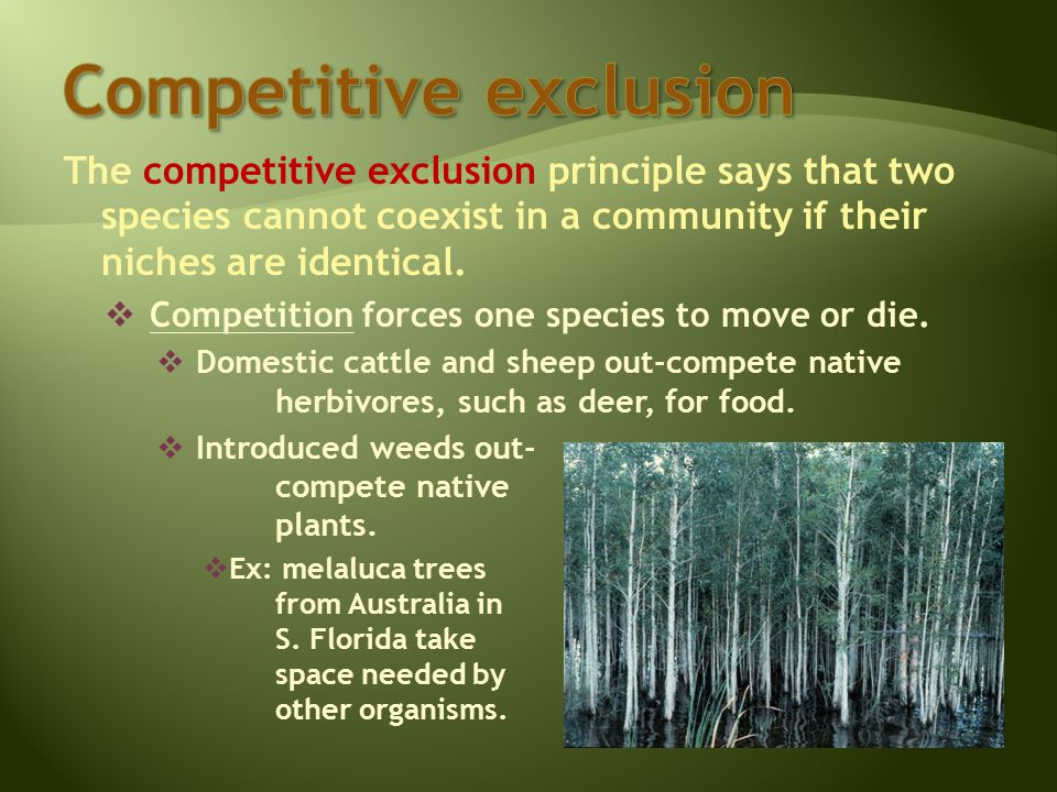 The competitive exclusion principle says that two species cannot coexist in a community if their niches are identical.