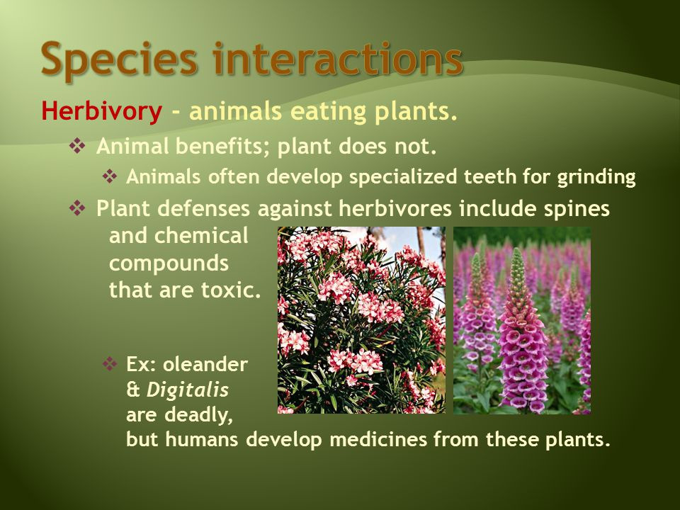 Herbivory - animals eating plants.  Animal benefits; plant does not.