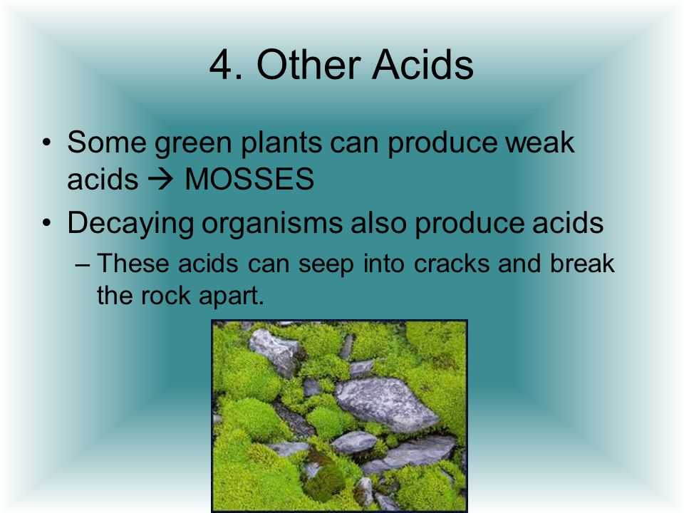 4. Other Acids Some green plants can produce weak acids  MOSSES Decaying organisms also produce acids –These acids can seep into cracks and break the