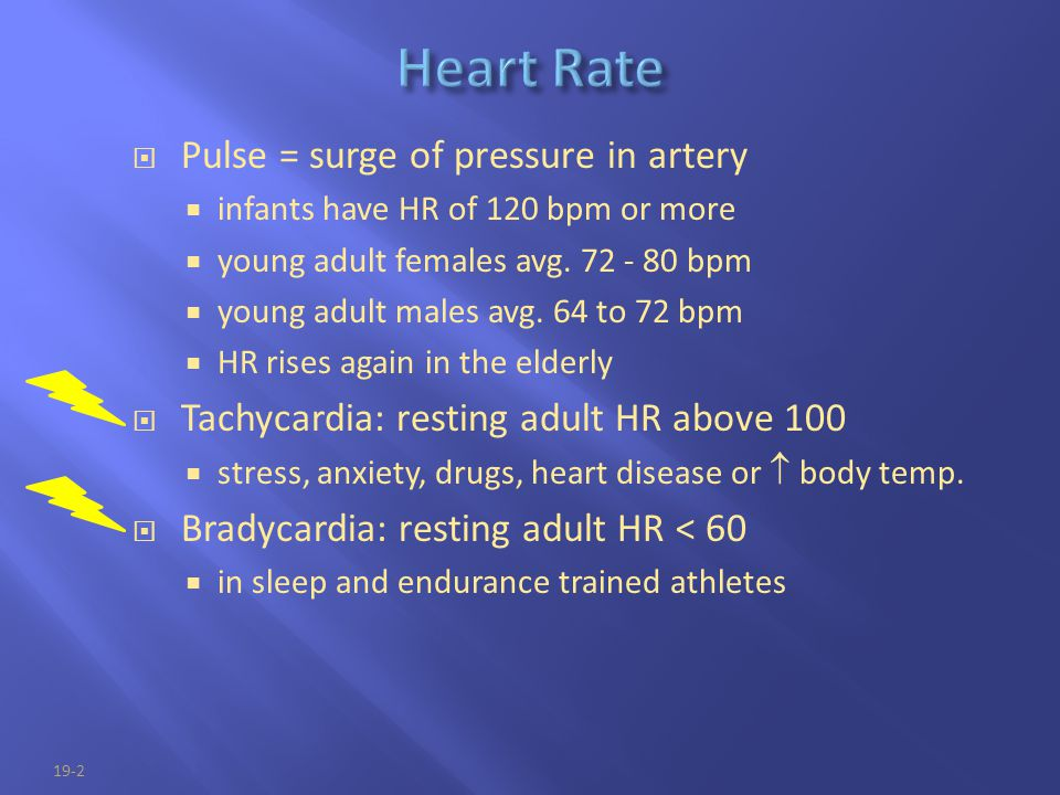 19-2  Pulse = surge of pressure in artery  infants have HR of 120 bpm or more  young adult females avg. 72 - 80 bpm  young adult males avg. 64 to