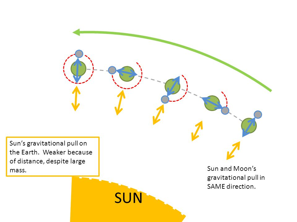 Sun and Moon's gravitational pull in SAME direction.