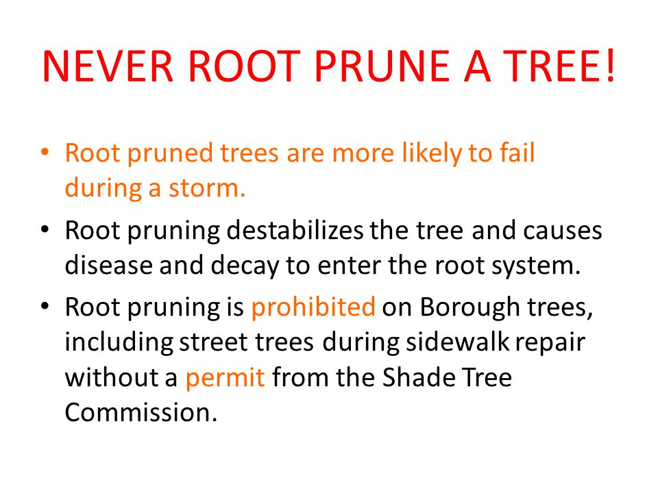 NEVER ROOT PRUNE A TREE. Root pruned trees are more likely to fail during a storm.