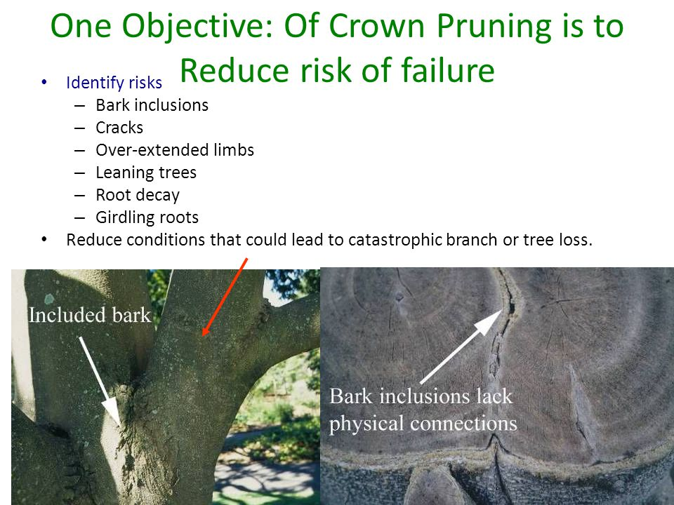 One Objective: Of Crown Pruning is to Reduce risk of failure Identify risks – Bark inclusions – Cracks – Over-extended limbs – Leaning trees – Root decay – Girdling roots Reduce conditions that could lead to catastrophic branch or tree loss.