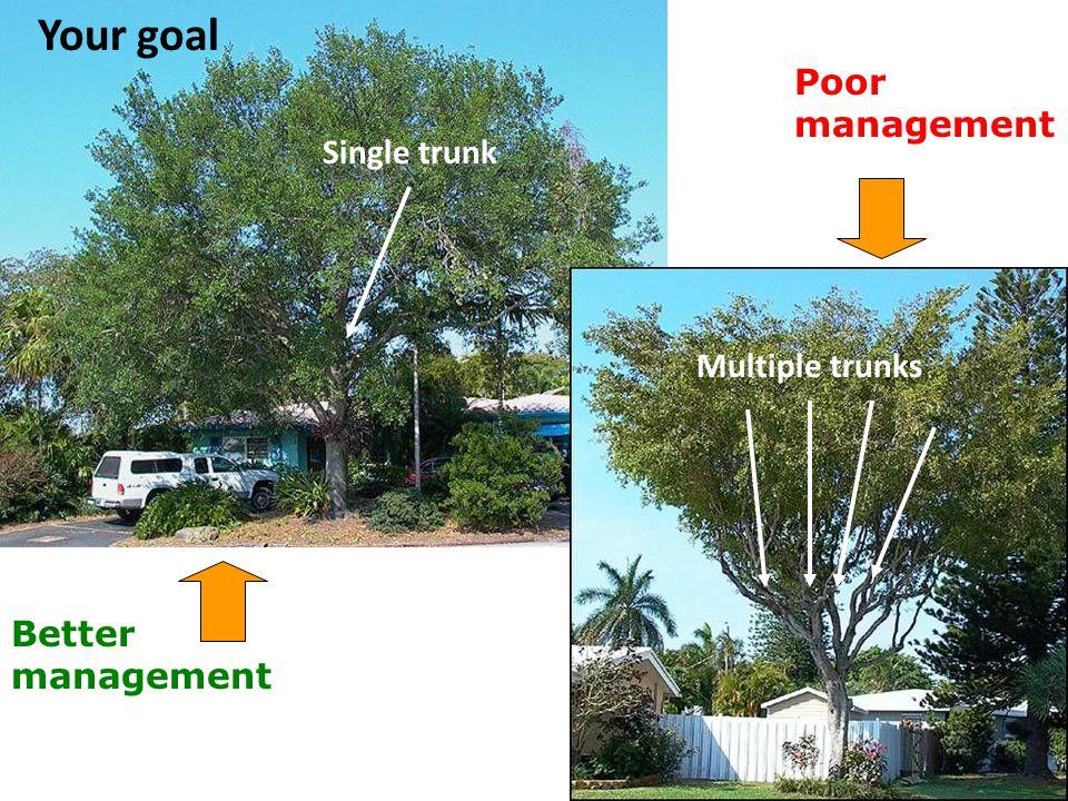 Poor management Better management Your goal Single trunk Multiple trunks