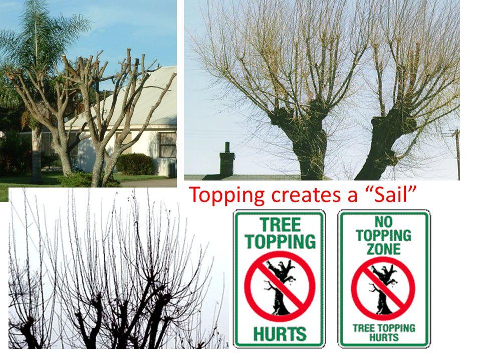 """Topping creates a """"Sail"""""""
