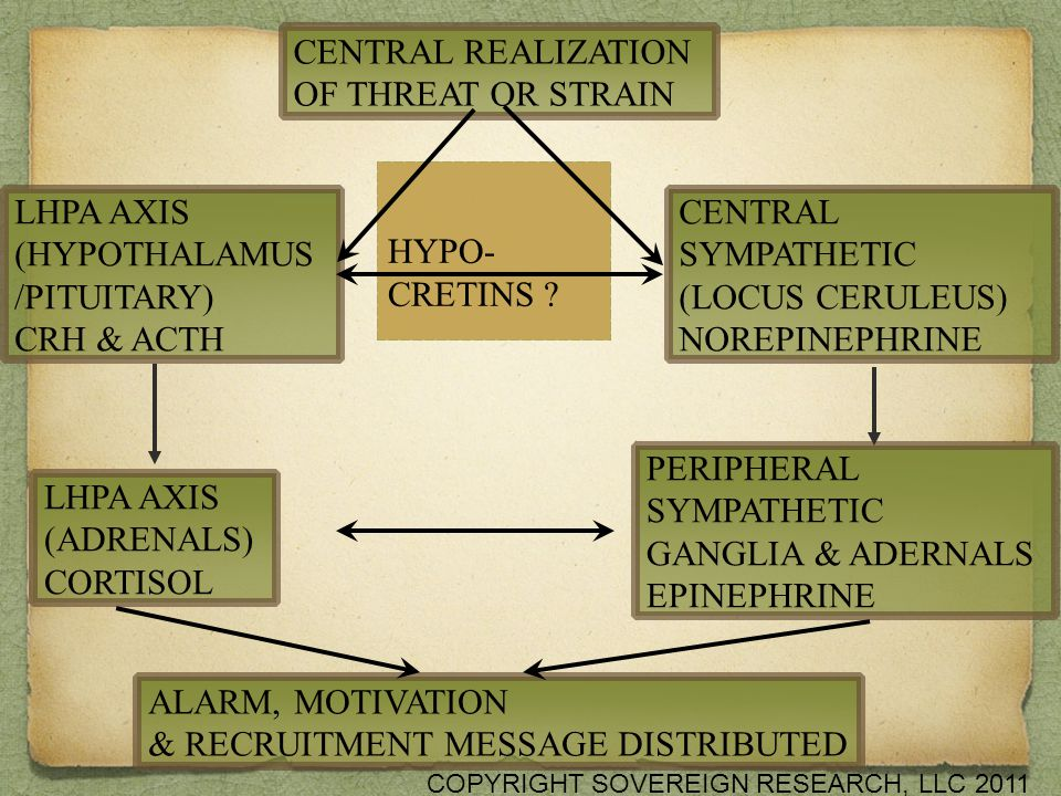 CENTRAL REALIZATION OF THREAT OR STRAIN LHPA AXIS (HYPOTHALAMUS /PITUITARY) CRH & ACTH LHPA AXIS (ADRENALS) CORTISOL ALARM, MOTIVATION & RECRUITMENT MESSAGE DISTRIBUTED PERIPHERAL SYMPATHETIC GANGLIA & ADERNALS EPINEPHRINE CENTRAL SYMPATHETIC (LOCUS CERULEUS) NOREPINEPHRINE HYPO- CRETINS .