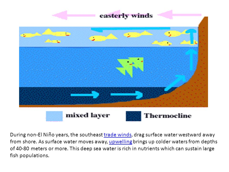 During non-El Niño years, the southeast trade winds, drag surface water westward away from shore.