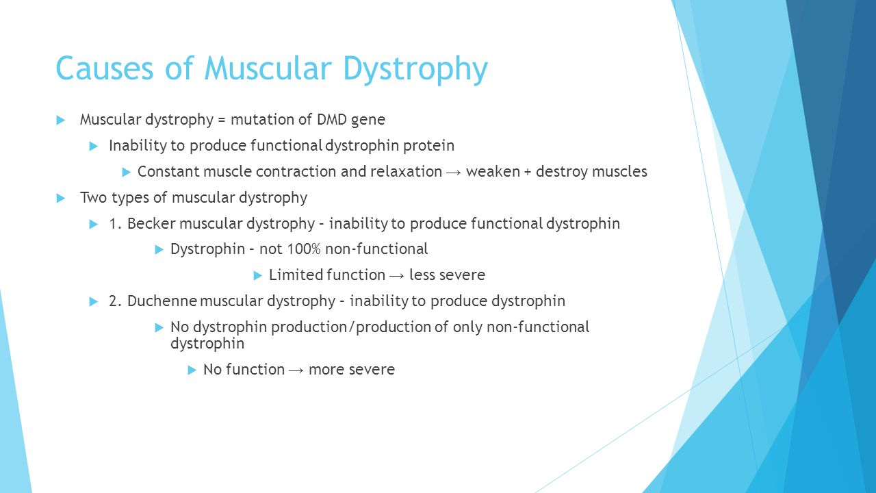 Causes of Muscular Dystrophy  Muscular dystrophy = mutation of DMD gene  Inability to produce functional dystrophin protein  Constant muscle contraction and relaxation → weaken + destroy muscles  Two types of muscular dystrophy  1.