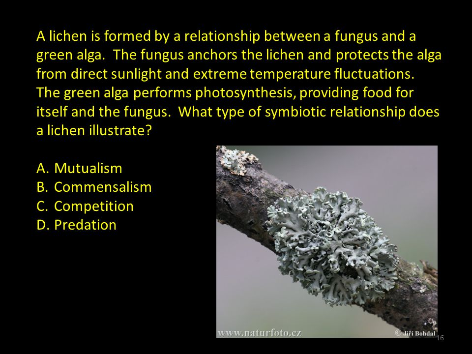 A lichen is formed by a relationship between a fungus and a green alga.