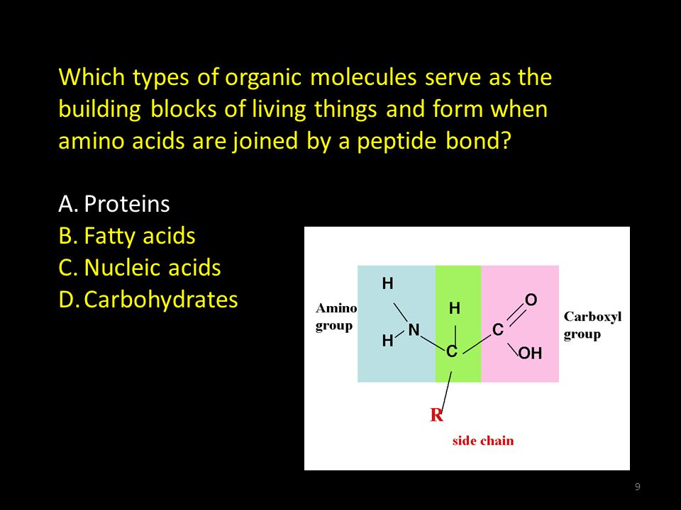 Which types of organic molecules serve as the building blocks of living things and form when amino acids are joined by a peptide bond.