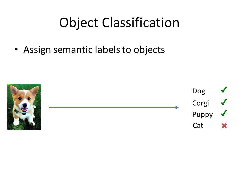 Object Classification Assign semantic labels to objects Corgi Puppy Dog Cat ✔ ✔ ✖ ✔