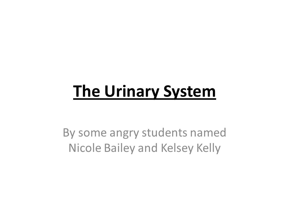 The Urinary System By some angry students named Nicole Bailey and Kelsey Kelly