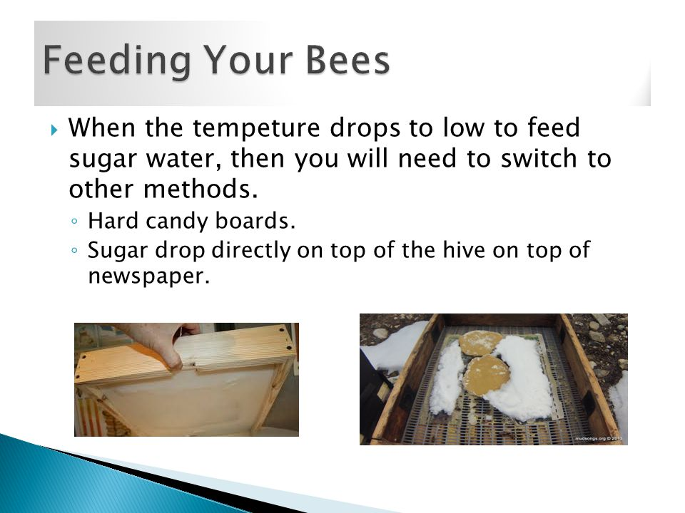  When the tempeture drops to low to feed sugar water, then you will need to switch to other methods.
