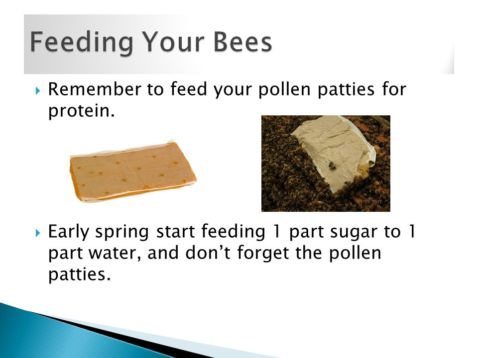  Remember to feed your pollen patties for protein.