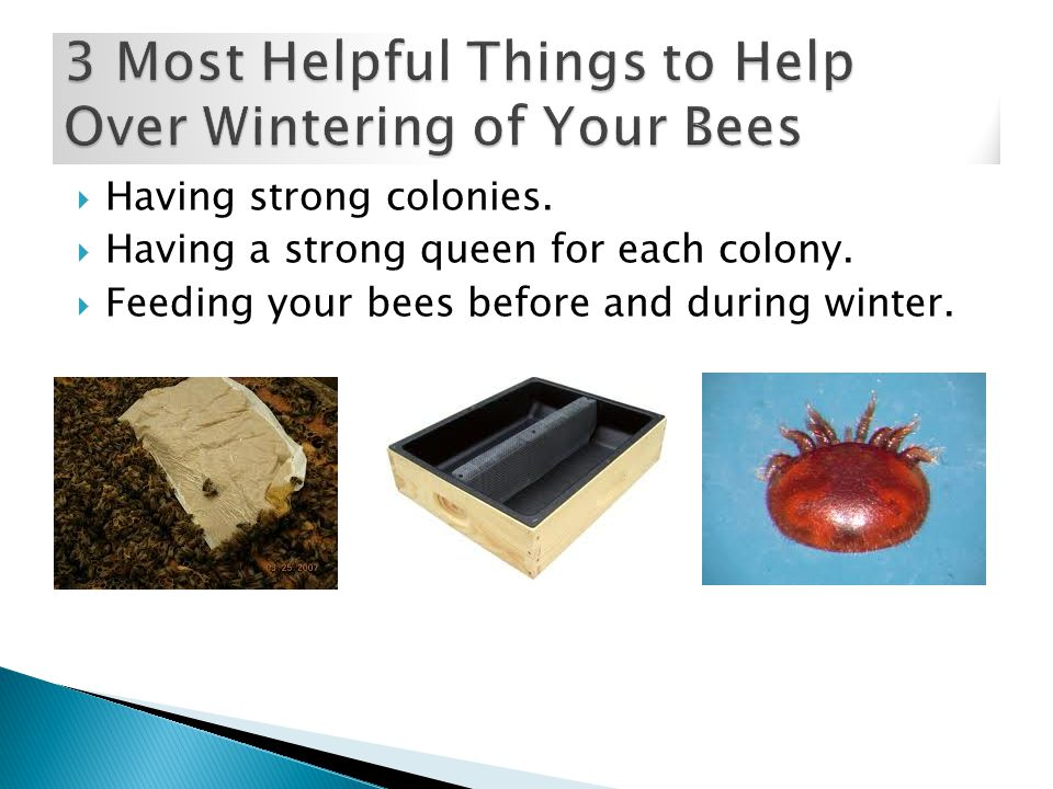  Having strong colonies.  Having a strong queen for each colony.