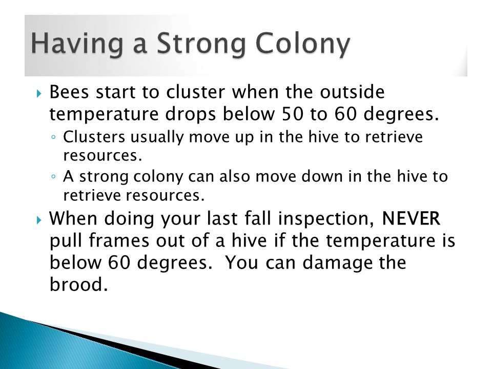  Bees start to cluster when the outside temperature drops below 50 to 60 degrees.