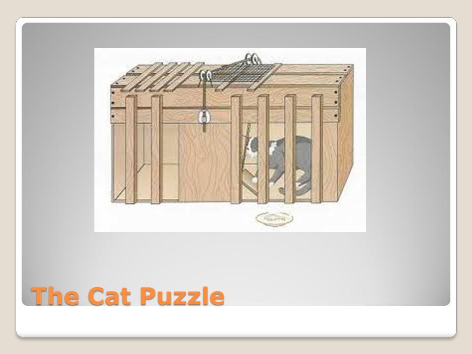 The Cat Puzzle