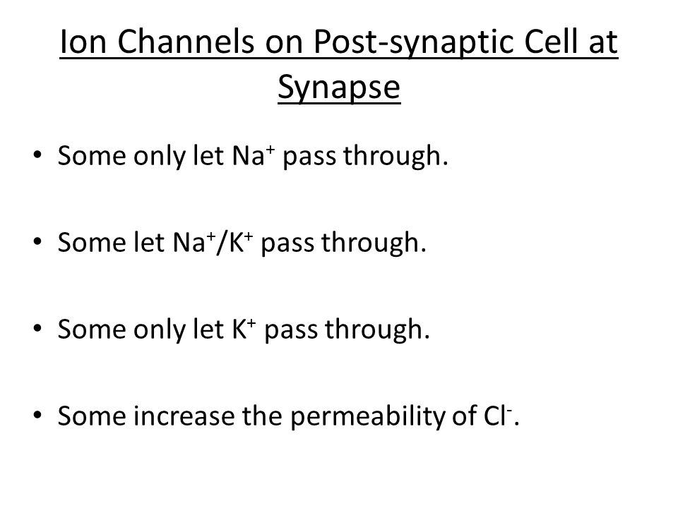 Ion Channels on Post-synaptic Cell at Synapse Some only let Na + pass through. Some let Na + /K + pass through. Some only let K + pass through. Some i