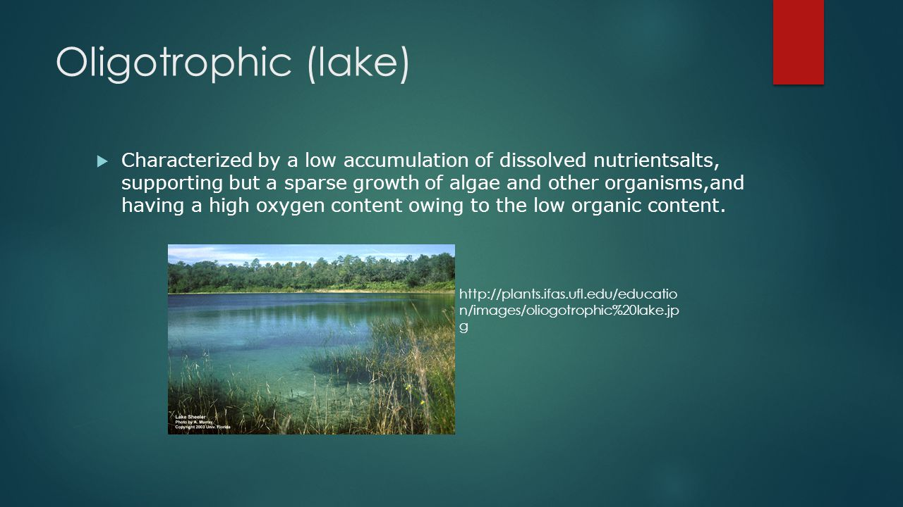 Oligotrophic (lake)  Characterized by a low accumulation of dissolved nutrientsalts, supporting but a sparse growth of algae and other organisms,and having a high oxygen content owing to the low organic content.