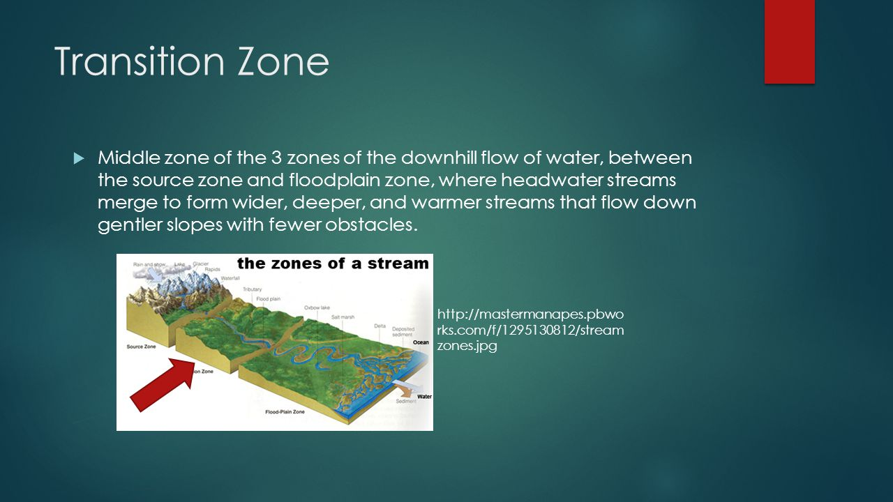 Transition Zone  Middle zone of the 3 zones of the downhill flow of water, between the source zone and floodplain zone, where headwater streams merge to form wider, deeper, and warmer streams that flow down gentler slopes with fewer obstacles.