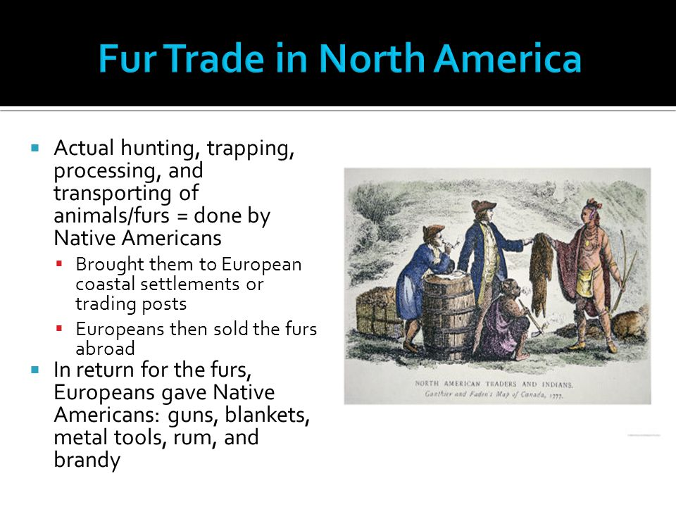  Actual hunting, trapping, processing, and transporting of animals/furs = done by Native Americans  Brought them to European coastal settlements or