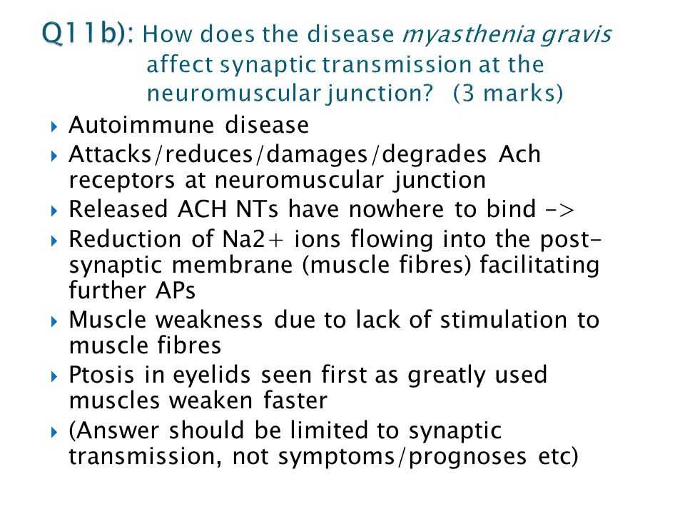 Autoimmune disease  Attacks/reduces/damages/degrades Ach receptors at neuromuscular junction  Released ACH NTs have nowhere to bind ->  Reduction