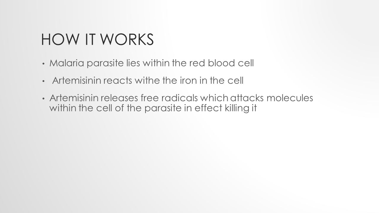 HOW IT WORKS Malaria parasite lies within the red blood cell Artemisinin reacts withe the iron in the cell Artemisinin releases free radicals which attacks molecules within the cell of the parasite in effect killing it