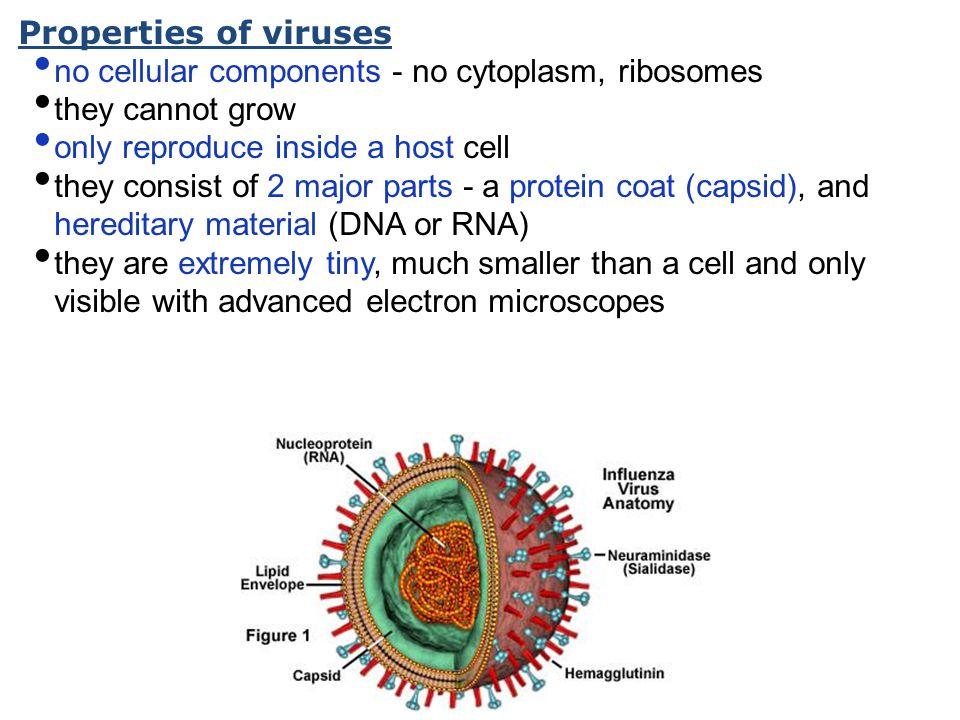 Bacillis Anthracis (Anthrax)