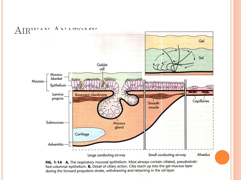 M UCOLYTICS Acetylcysteine sodium bicarbonate (NaHCO 3 ) Dornase alfa Pulmozyme