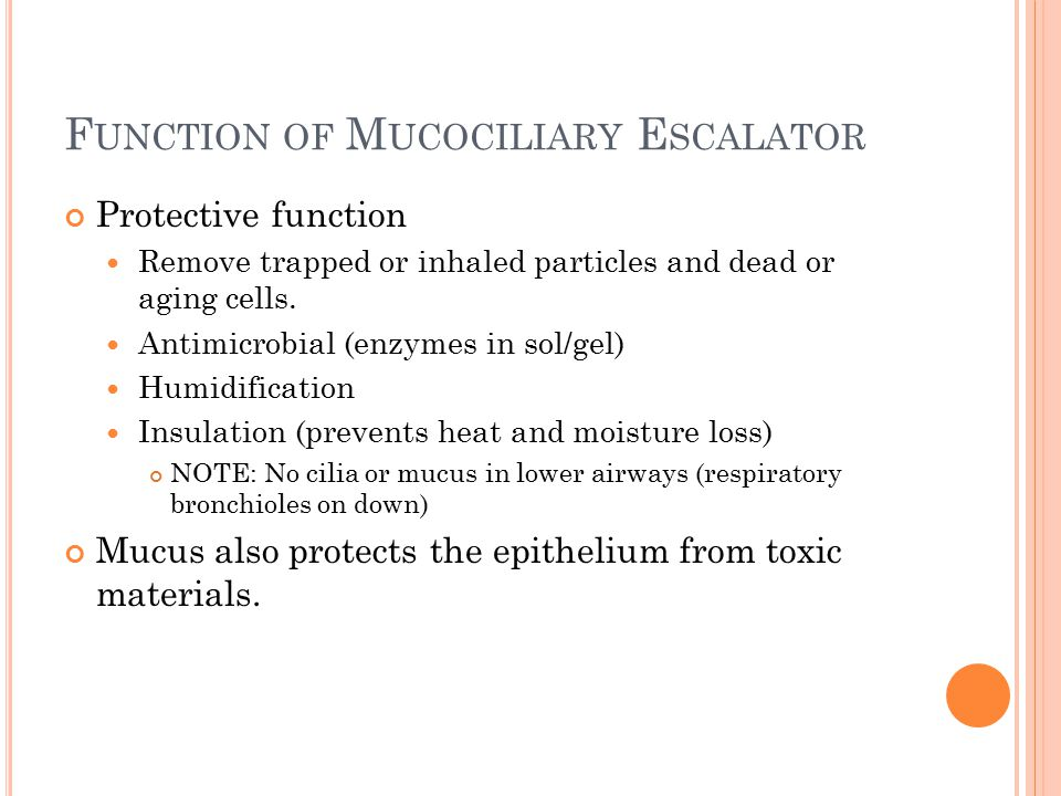 M UCOCILIARY E SCALATOR Mucosal Blanket Sol layer Gel layer Cilia 200 per cell 6  m in length Beat 1000/min Move mucus 2 cm/min Paralyzed by cigarette smoke